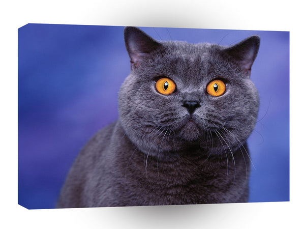 Cat Bewitched Blue British Shorthair A1 Xlarge Canvas