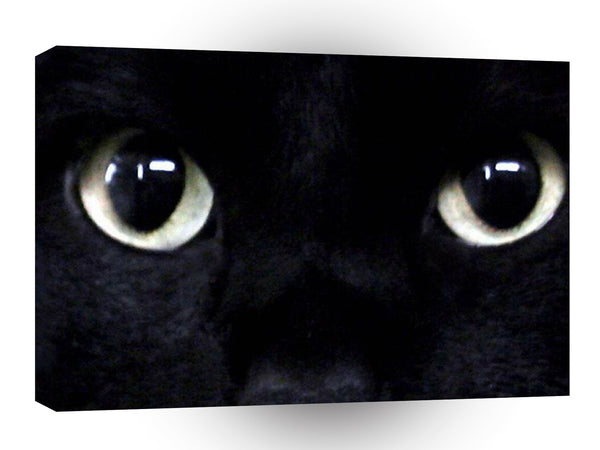 Cat Black Eyes A1 Xlarge Canvas