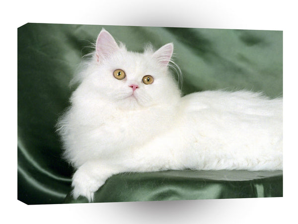 Cat Blanche White Persian A1 Xlarge Canvas