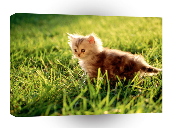 Cats Kitten Small Cheeks A1 Xlarge Canvas