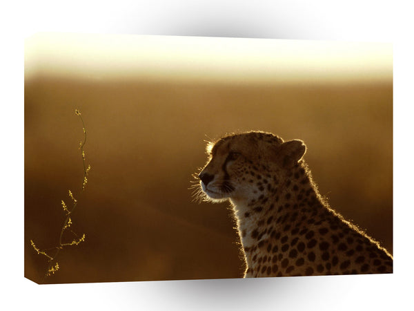 Cheetah Afterthoughts A1 Xlarge Canvas