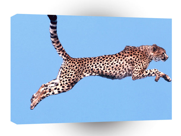 Cheetah Air Time A1 Xlarge Canvas