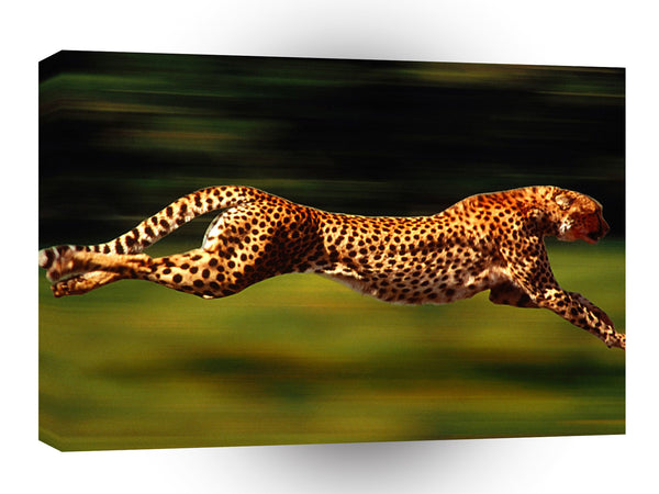 Cheetah High Velocity A1 Xlarge Canvas