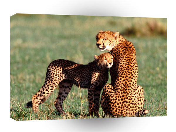 Cheetah Nuzzling A1 Xlarge Canvas