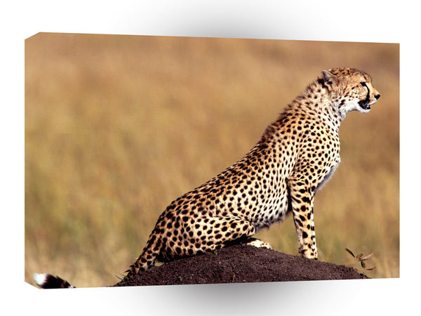Cheetah Posture A1 Xlarge Canvas