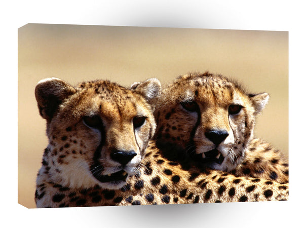 Cheetah Strategic Planning Pair A1 Xlarge Canvas