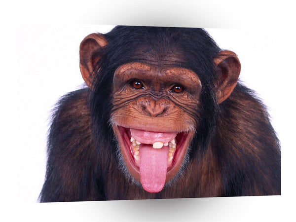 Chimpanzees Are We Having Fun Yet A1 Xlarge Canvas