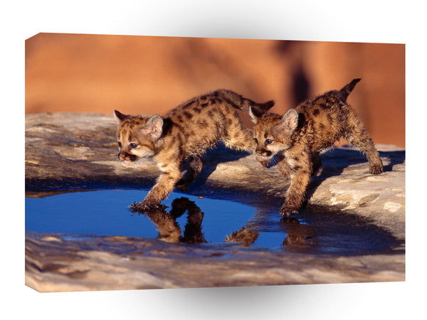 Cougar Cubs A1 Xlarge Canvas