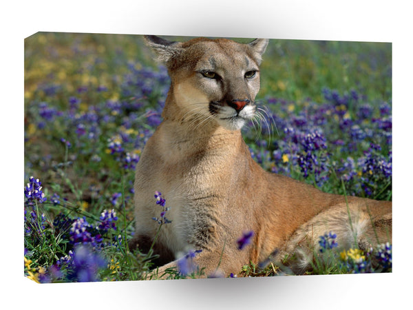Cougar Fragrant Wildflowers A1 Xlarge Canvas