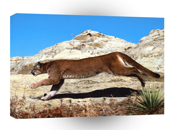 Cougar Full Charge A1 Xlarge Canvas