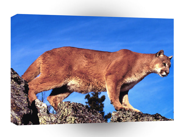 Cougar Skylined A1 Xlarge Canvas