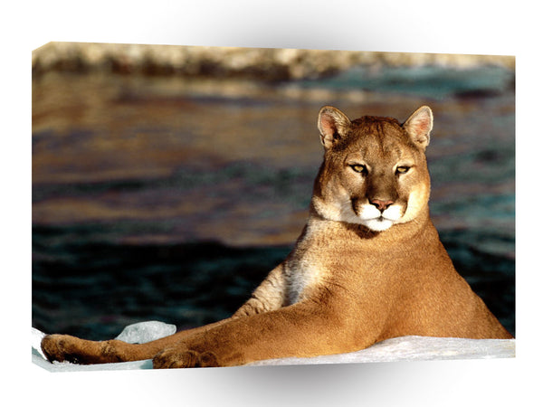 Cougar Winter Shoreline A1 Xlarge Canvas