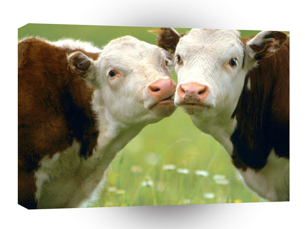 Cow Mooving In For A Kiss A1 Xlarge Canvas