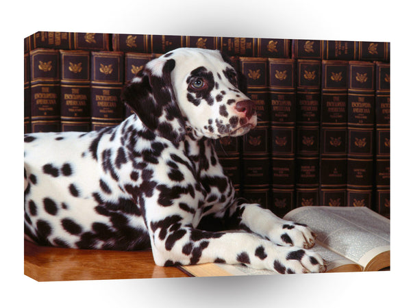 Dalmation Deep Thoughts A1 Xlarge Canvas
