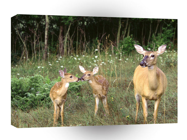 Deer A Kiss For Mommie Michigan A1 Xlarge Canvas