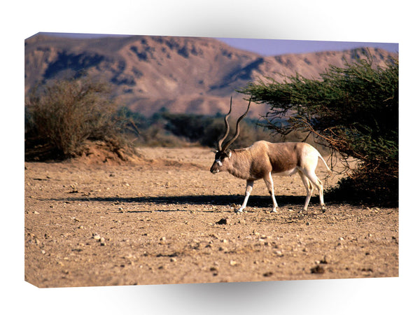 Deer Addax The Range A1 Xlarge Canvas