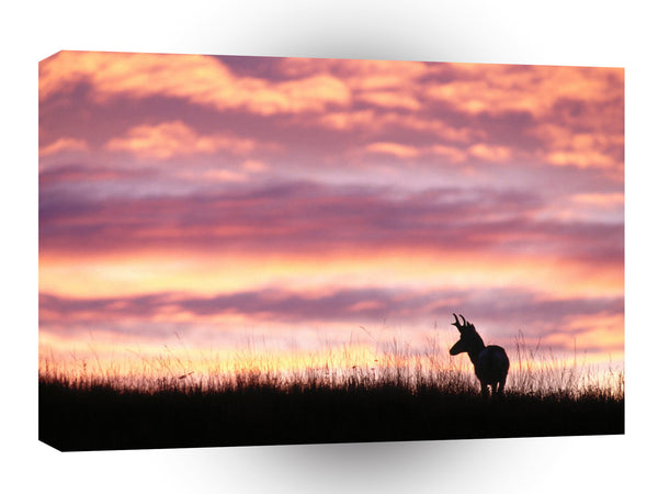Deer Antelope Wyoming A1 Xlarge Canvas