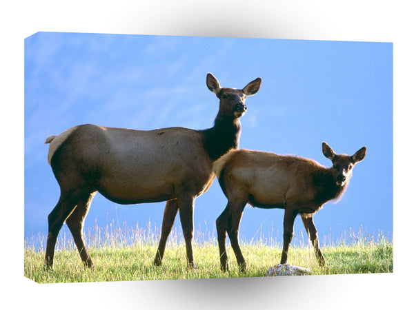 Deer Cow Elk With Calf A1 Xlarge Canvas