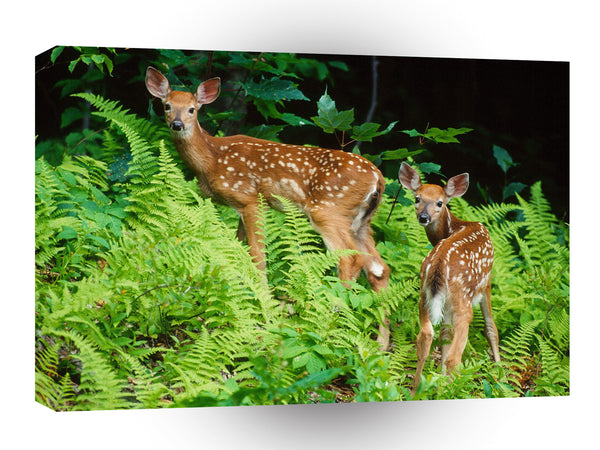 Deer Curious Fawns A1 Xlarge Canvas