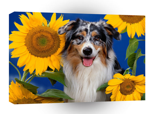 Dog Australian Shepherd A1 Xlarge Canvas