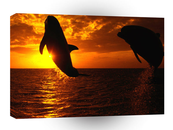 Dolphin Aquatic Symphony A1 Xlarge Canvas