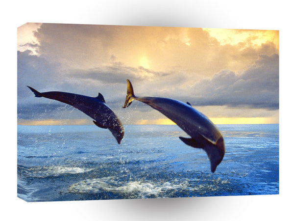 Dolphin Bottlenose A1 Xlarge Canvas