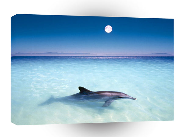Dolphin Moonlit Ride A1 Xlarge Canvas