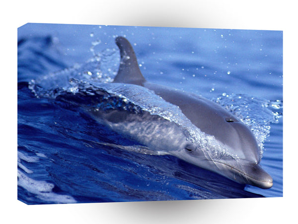 Dolphin Surf Frolic Little Bahama A1 Xlarge Canvas