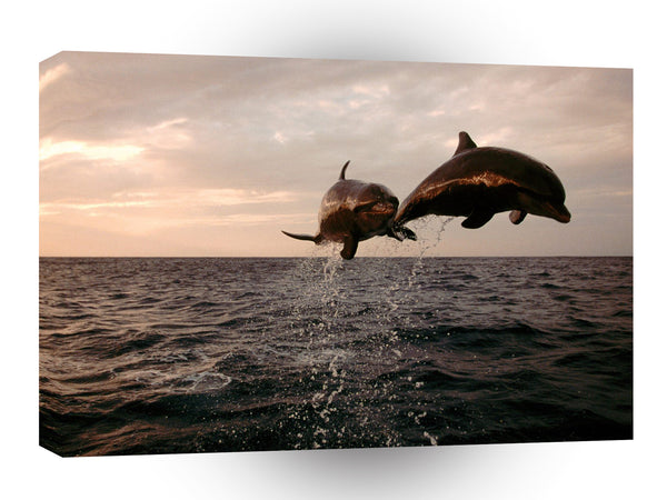 Dolphin Taking Flight Bottlenose A1 Xlarge Canvas