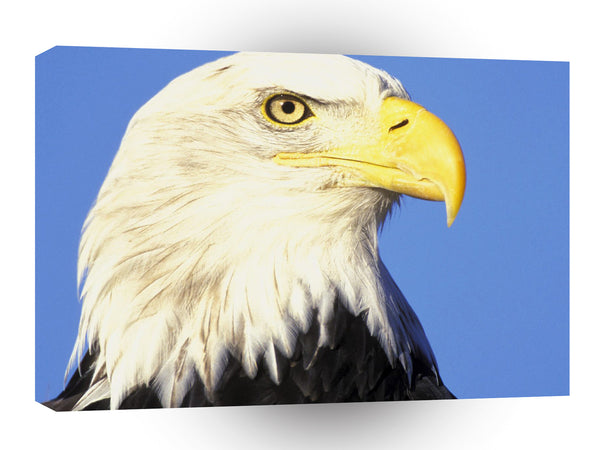 Eagle Enduring Look A1 Xlarge Canvas