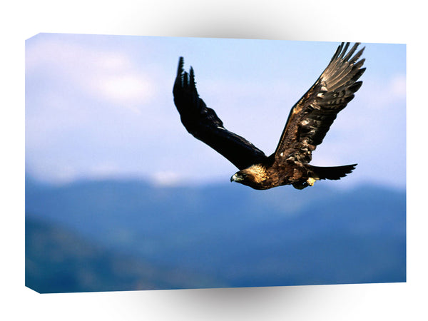 Eagle Soaring High Golden A1 Xlarge Canvas