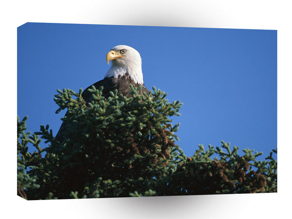 Eagle View From Top Bald Alaska A1 Xlarge Canvas