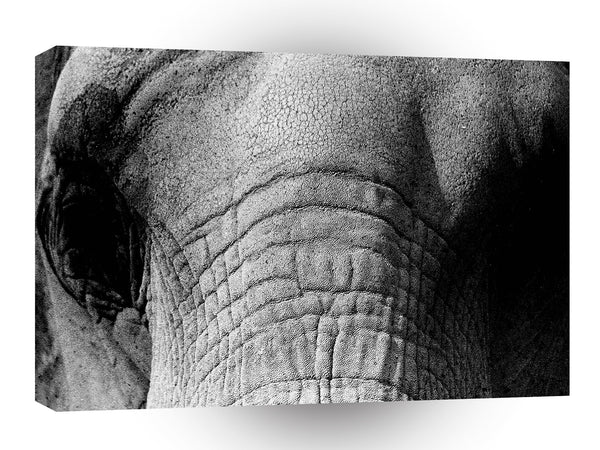Elephant Gray Wrinkles A1 Xlarge Canvas