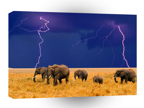 Elephant In An Approaching Storm A1 Xlarge Canvas