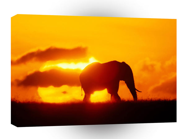 Elephant Solitary Splendor A1 Xlarge Canvas