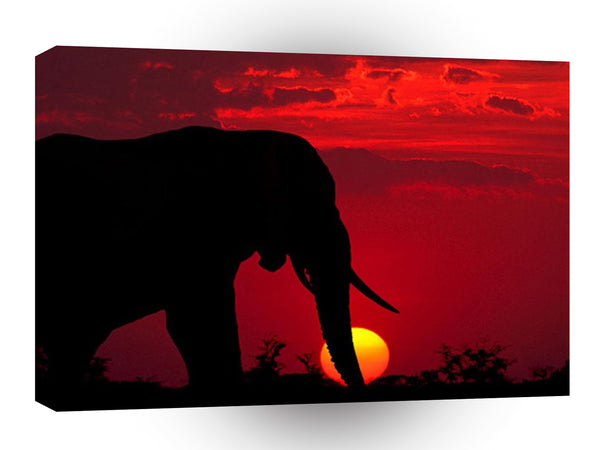 Elephant Sunrise A1 Xlarge Canvas
