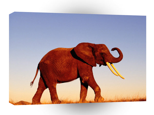 Elephant Walking Morning Light A1 Xlarge Canvas