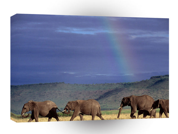 Elephant Walking Rainbow Sky Kenya A1 Xlarge Canvas