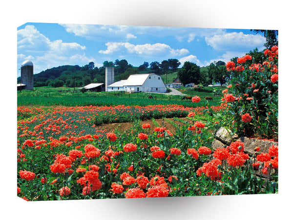Farms And Barns Farm And Poppies Bardstown Kentucky A1 Xlarge Canvas
