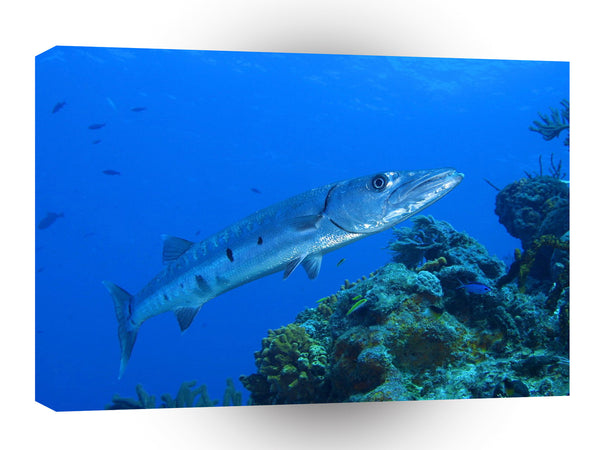 Fish Barracuda Bahama Reef A1 Xlarge Canvas