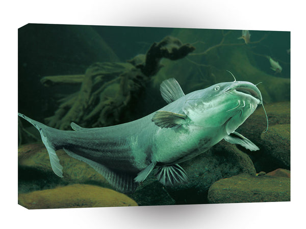 Fish Blue Catfish Swimming Floor A1 Xlarge Canvas