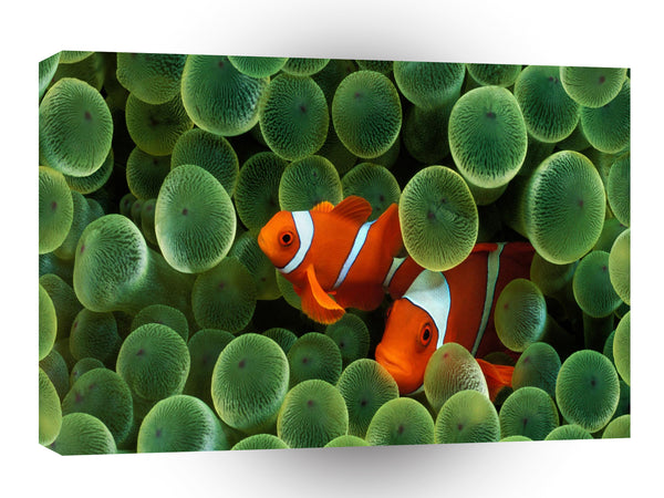 Fish Clown Fish A1 Xlarge Canvas