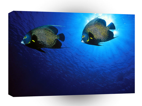 Fish French Angelfish A1 Xlarge Canvas