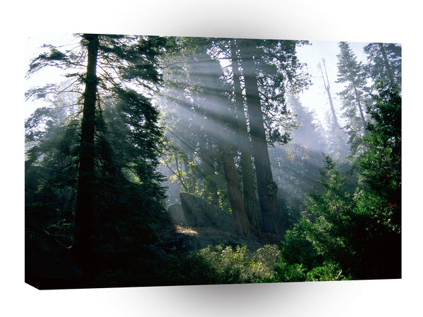 Forest A Wonder In Woods A1 Xlarge Canvas