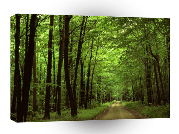 Forest Allegheny Pennsylvania A1 Xlarge Canvas
