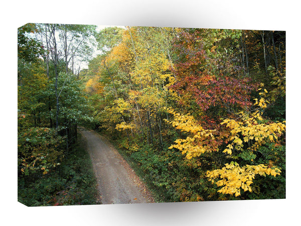 Forest Autumn Roadway Smoky Mountains Tennessee A1 Xlarge Canvas