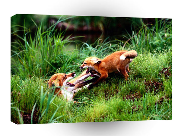 Foxes Red Horseplay A1 Xlarge Canvas