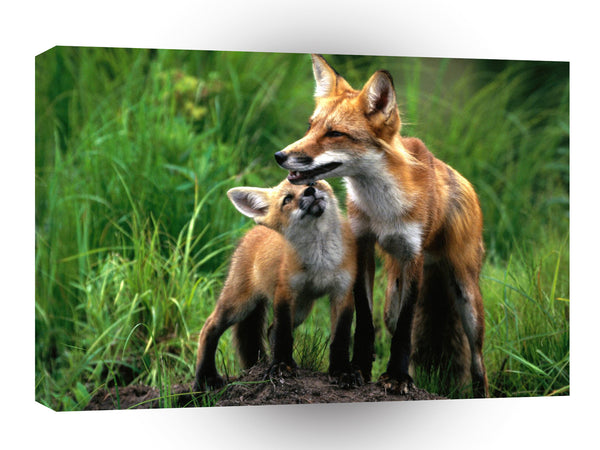 Foxs Good To Be Loved A1 Xlarge Canvas