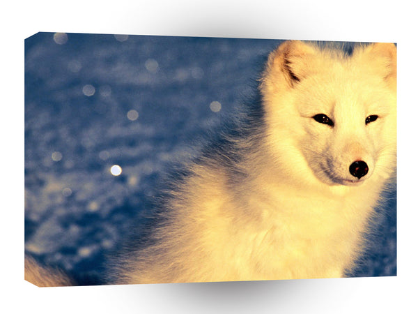 Foxs Look Of Arctic A1 Xlarge Canvas