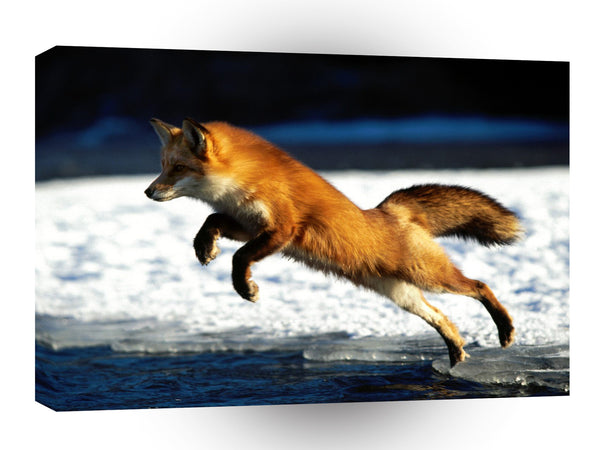 Foxs Springing Into Action A1 Xlarge Canvas